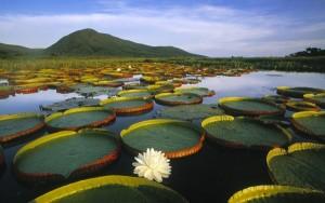 Pantanal-Feat-e1354056511351