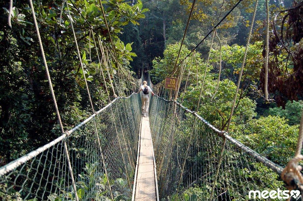 Suspension Bridges Of Canopy