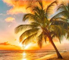 sunny destination