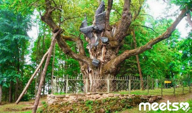 money oak
